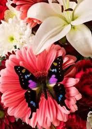 imagenes bonitas que brillen imagenes de flores bonitas que brillen para poner en whatsapp 11