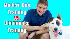 how to train dog to stop barking leash training a puppy all the tips and tricks you need to know