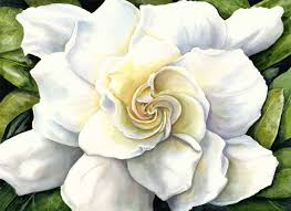 photo of gardenia flower awesome august beauty gardenia cape