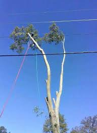 best 25 tree trimming service ideas on