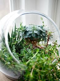 Indoor Herb Garden Light The Indoor Garden Harrisons