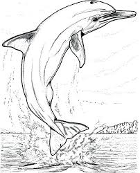 Coloriage Dauphin Dauphin Coloriage Magique Dauphin Imprimer