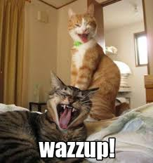 Scream Wazzup Meme - wazzup cute and crazy critters pinterest hilarious and memes