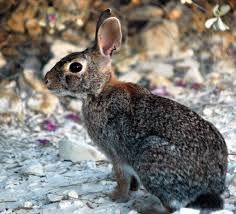 how to make your pet rabbit learn some tricks animal bliss