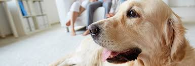 fantastic floors inc what is the best type of flooring for pets