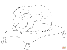 magnificent guinea pig coloring page with guinea pig coloring