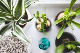 8 houseplants to grow that can dramatically improve your health