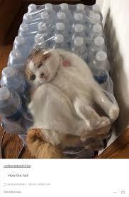 Memes Cat - 52 funny cat memes that prove cats still rule the internet