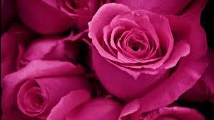 Beautiful Flowers Image Top 27 Beautiful Flowers Wallpapers In Hd Warner Buzz