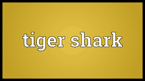 tiger shark meaning
