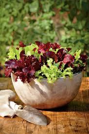 Lettuce Container Garden Heat Tolerant Container Gardens For Sweltering Summers Southern