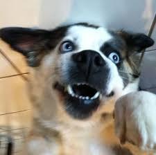 the 25 best pomeranian husky puppies ideas on pinterest husky
