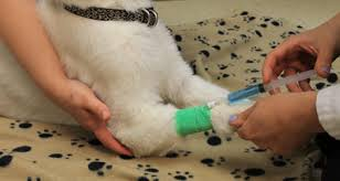 pet euthanasia pet euthanasia cremation service in etobicoke veterinary hospital