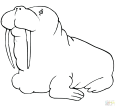 coloring page for walrus walrus coloring page walrus coloring page walrus coloring pages fat