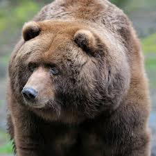 Sad Bear Meme - pin by anita jann on bears pinterest bears and animal