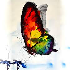 23 best images on ideas hummingbird