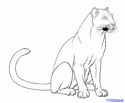 coloring pages exquisite drawing panther draw pink