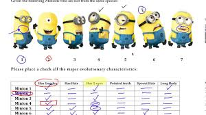 ap biology cladogram practice with minions youtube