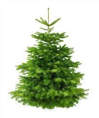 real christmas tree real christmas tree pictures ne wall