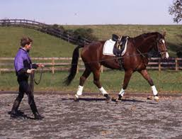 an easy equine fitness plan the horse owner u0027s resource