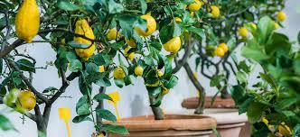 growing fruit trees flower power