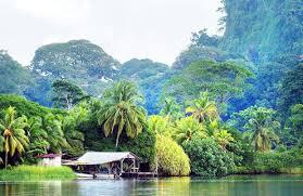 jungle boat tour costa rica u0027s tortuguero national park