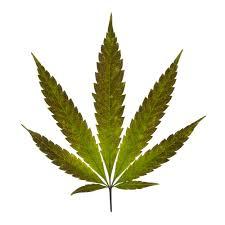 marijuana facts about cannabis