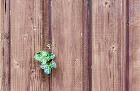 wooden leaves wall free images nature plant leaf flower green brown
