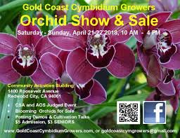 orchid plants for sale gold coast cymbidium growers home