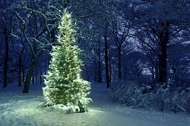 Fairy Lights In Trees by Wallpaper New Year Winter Nature Christmas Tree Snow Parks Fairy