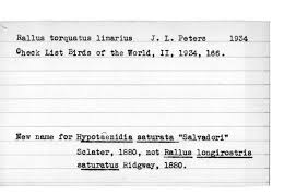 listbirds richmond index species u0026 subspecies rallus obscurus