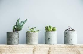 succulents in diy concrete pot scandinavian room interior