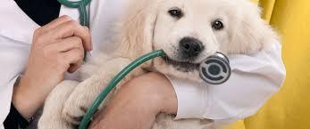 test ingresso veterinaria test di ammissione veterinaria info test ammissione veterinaria