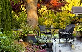 Plants For Patios In The Shade Design Pro Stacie Crooks Plants What She Preaches In Her Edmonds