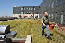 how to plant native grasses unl u0027s sutton brings native grasses flowers to green roofs news