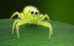 anyone else a huge fan of jumping spiders album on imgur