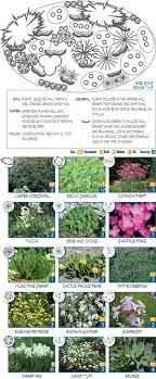 637 best plants images on landscaping flower