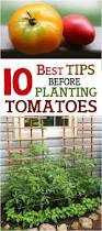 8 best gardening images on pinterest gardening apartment