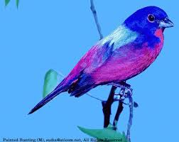 South Carolina birds images Upland consumers gif