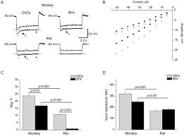 chandelier cells electrophysiological heterogeneity of fast spiking interneurons