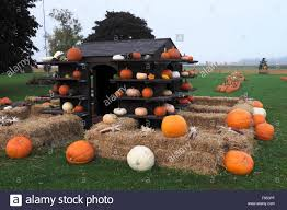 autumn display with a variety of pumpkins gourds and other