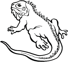desert lizard coloring page lizards coloring pages iguana click the alpha male lizard frilled