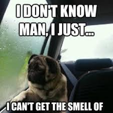 Depressed Pug Meme - depressed pug by xhavit limani 3 meme center