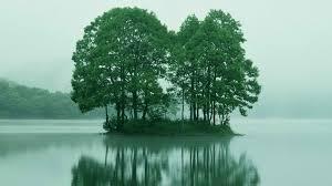 trees fukushima japan desktop wallpaper nature size hd