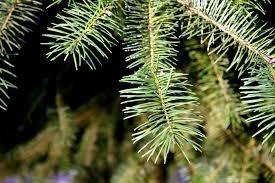 buy live christmas tree christmas lights decoration