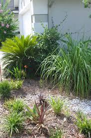 Drought Tolerant Backyard Ideas The Rainforest Garden How To Plant A Lush Drought Tolerant Garden