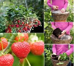 Diy Strawberry Planter by Wonderful Diy Vertical Pvc Planter