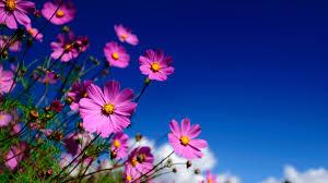 Flower Image Hd Flower Images Qygjxz
