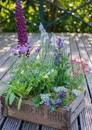 pflanzen fã r den balkon 92 best balkon ideen images on balcony gardening and diy