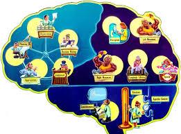 Image Of Brain Anatomy Brain Injury Com The Anatomy Of The Brain